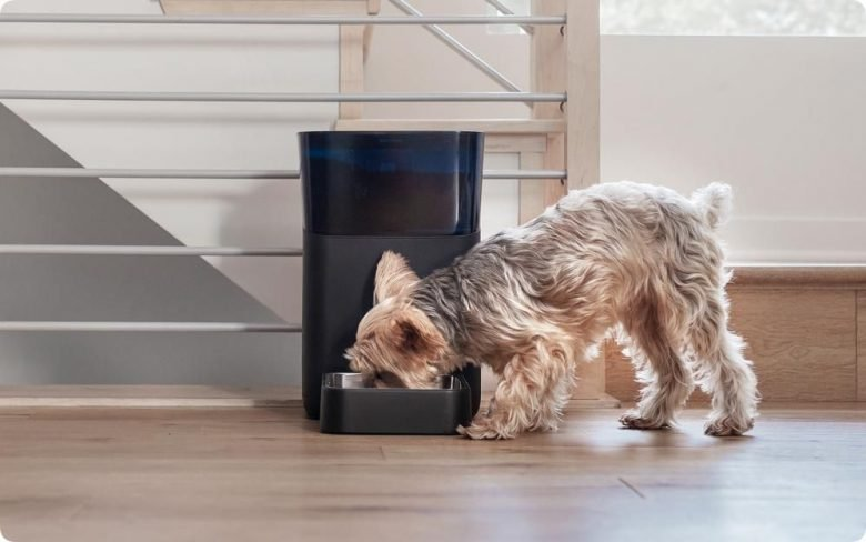 5 best smart devices for your dog
