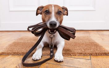 Top pet tech products & other goodies for your fur babies