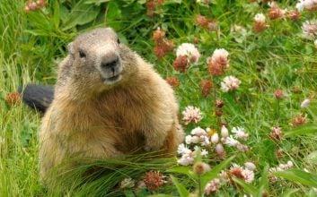 The pagan origins of Groundhog day