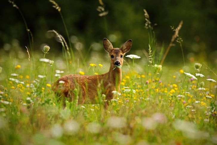 Does car insurance cover hitting a deer?