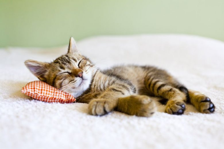 35 things you probably didn't know about cats