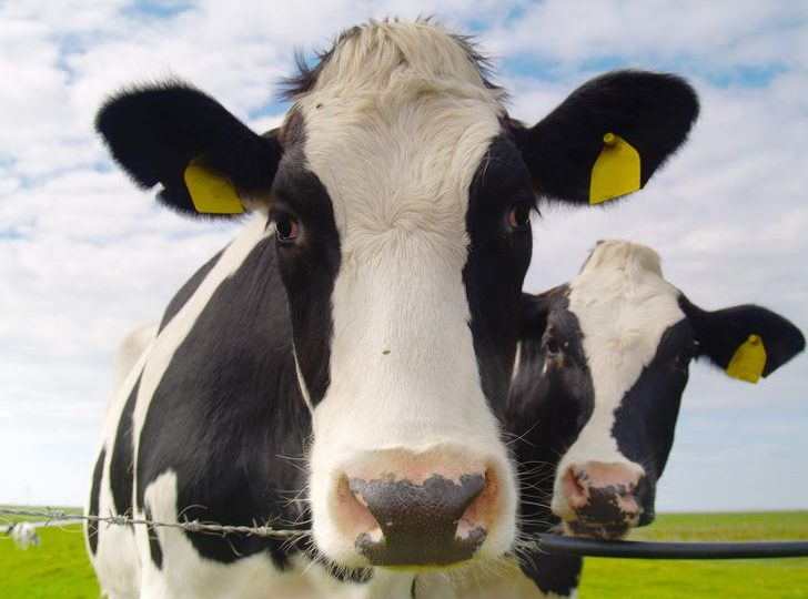 5G biometric wearables have arrived, but cows will get them first