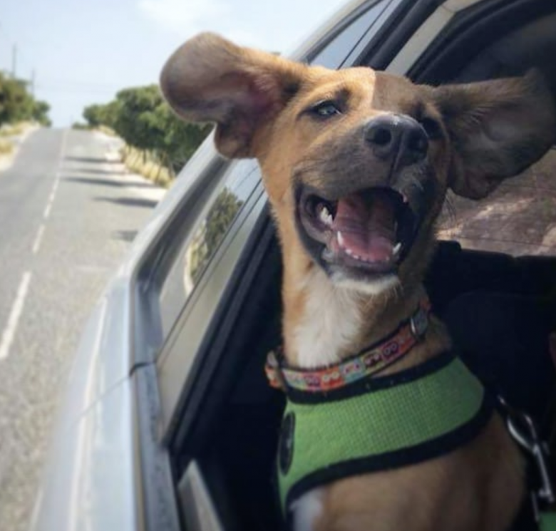 This tropical island is full of cute rescue dogs