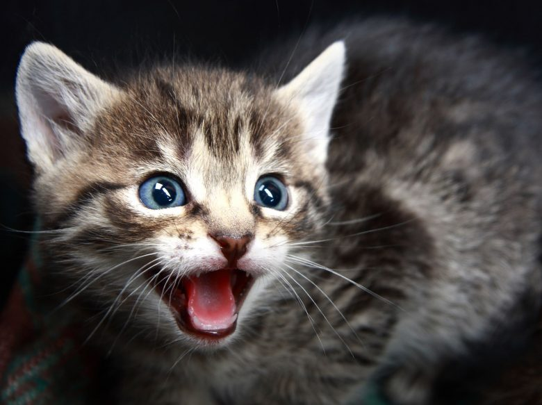 43 pictures of really adorable kittens that will make you feel better