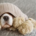How to keep your dog safe during fireworks & thunderstorms