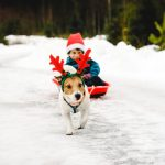 22 ridiculously cute critters in holiday costumes