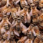 This home infested with bees literally drips honey