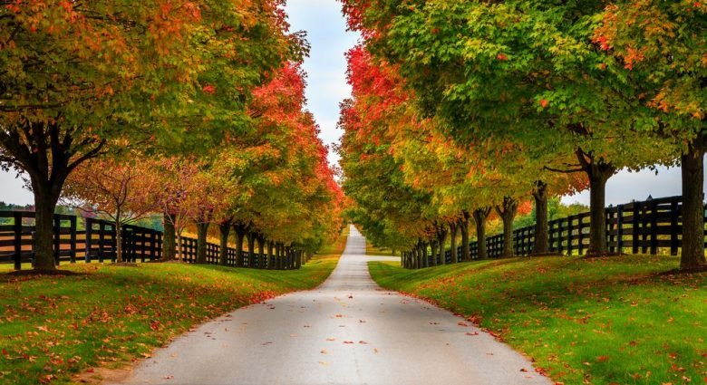 The best & worst states for a fall getaway during COVID-19