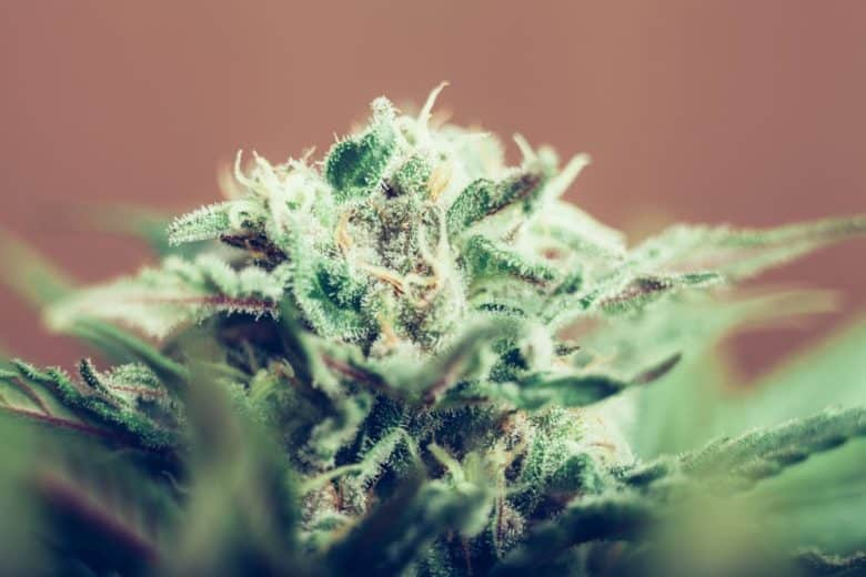 Here's how cannabis affects your sleep