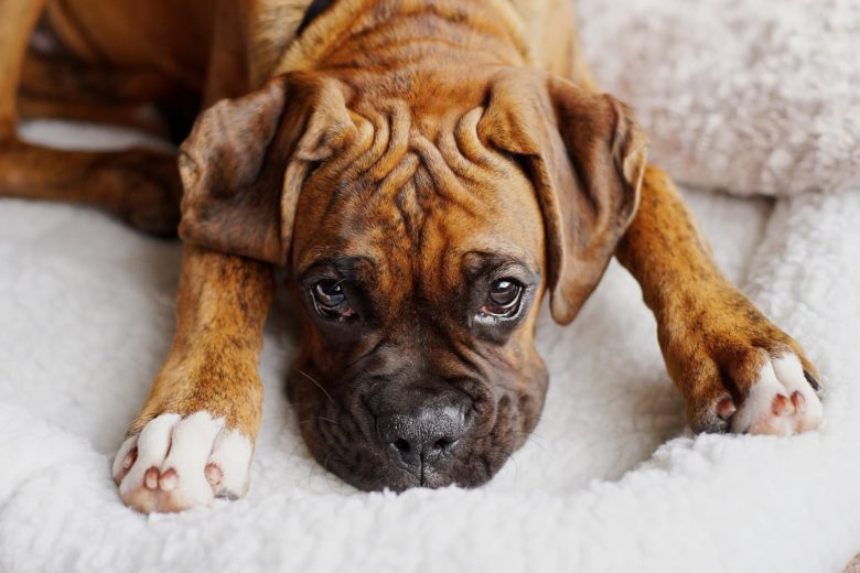 How did these 13 dog breeds get their names?