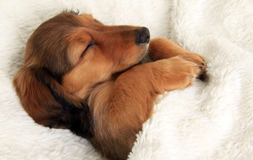 These are the animals that sleep the most & the least