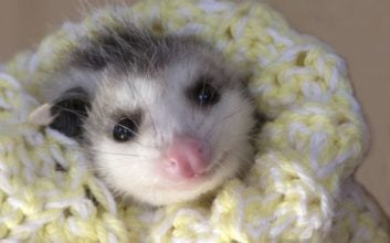 24 reasons we love opossums (and you should, too!)