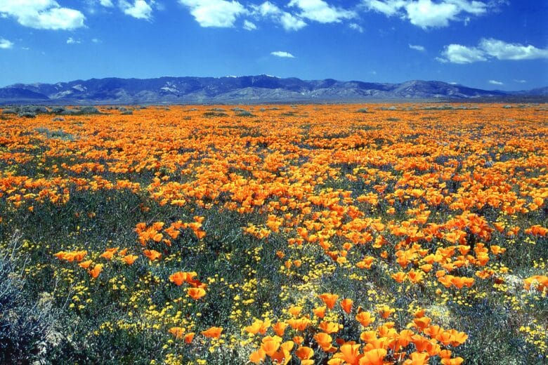 15 places to see gorgeous wildflowers this year
