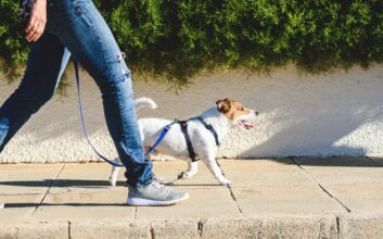 Love pets? Here's how you can turn that into cash
