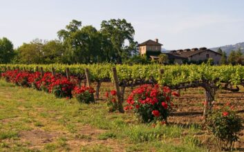 Napa Valley and family-friendly wineries