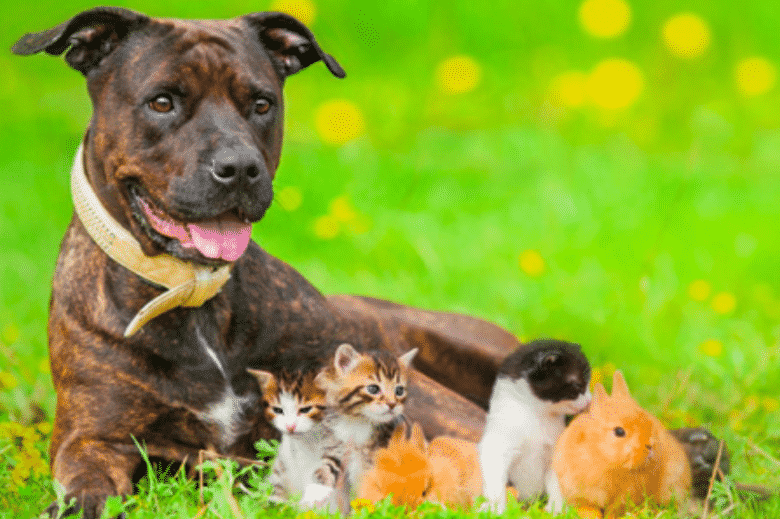 These are the 9 cheapest pets to own