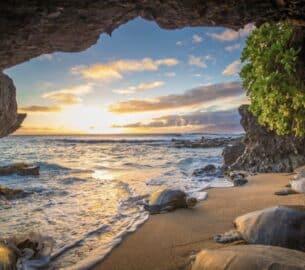 Honu Turtles in Hawaii