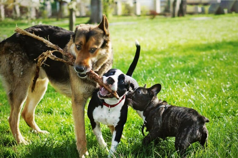 The most popular dog names in the world