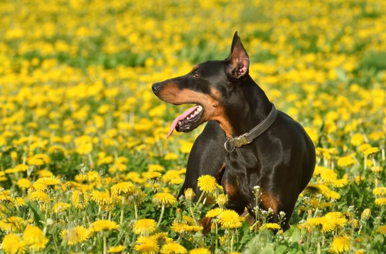 Want a really smart dog? Check out these 29 breeds